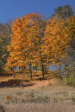 Follaje anaranjado contra el cielo azul profundo, hueco de Mansfield, Connecti Imagen de archivo libre de regalías