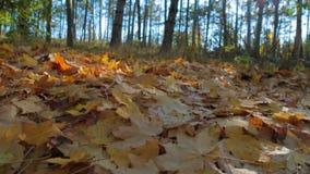 Follaje caido en la cámara lenta del bosque almacen de metraje de vídeo