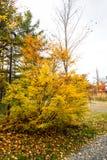 Follaje colorido de árboles en otoño Fotografía de archivo libre de regalías