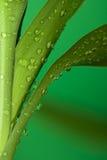 Follaje de bambú Imágenes de archivo libres de regalías