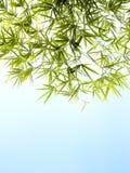 Follaje de bambú y fondo brillante del cielo azul Foto de archivo