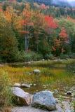 Follaje de caída, Acadia foto de archivo