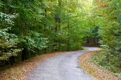 Follaje de caída en un camino forestal. Fotos de archivo libres de regalías