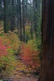 Follaje de caída en Yosemite Imágenes de archivo libres de regalías