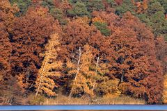 Follaje de caída rojo marrón en el lago Fotos de archivo