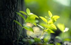 Follaje de la luz del sol Foto de archivo libre de regalías