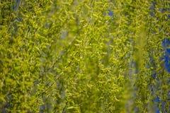 Follaje de la primavera en un bosque, en un día soleado brillante Imagen de archivo libre de regalías
