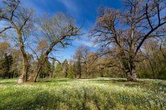 Follaje de la primavera en un bosque, en un día soleado brillante Fotografía de archivo libre de regalías