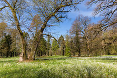 Follaje de la primavera en un bosque, en un día soleado brillante Fotos de archivo
