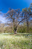 Follaje de la primavera en un bosque, en un día soleado brillante Imagen de archivo