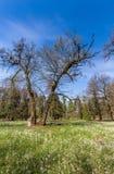 Follaje de la primavera en un bosque, en un día soleado brillante Fotos de archivo libres de regalías