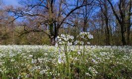 Follaje de la primavera en un bosque, en un día soleado brillante Foto de archivo