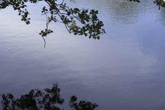 Follaje de la reflexión Imágenes de archivo libres de regalías