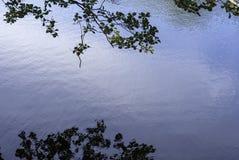 Follaje de la reflexión Imagenes de archivo