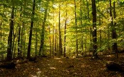 Follaje de los árboles de la caída en Vermont, cubiertas la tierra foto de archivo