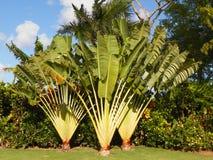 Follaje de los árboles de las plantas tropicales Foto de archivo libre de regalías
