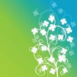 Follaje de los tréboles en fondo verde Imagenes de archivo