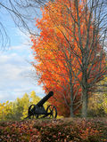 Follaje de New Hampshire Imagen de archivo libre de regalías