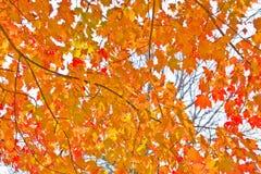 Follaje de otoño Imágenes de archivo libres de regalías