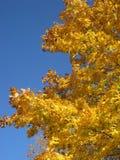 Follaje de otoño 6 Imagenes de archivo