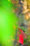 Follaje de otoño Autumn Leaves Close Up Background Imagen de archivo libre de regalías