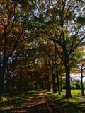 Follaje de otoño colorido Fotografía de archivo