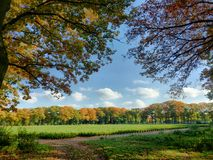 Follaje de otoño colorido Imagenes de archivo