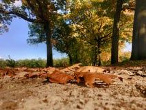 Follaje de otoño colorido Foto de archivo libre de regalías