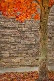 Follaje de otoño con el fondo de piedra Imagen de archivo