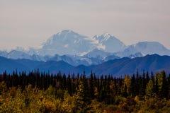 Follaje de otoño con la montaña en el fondo, Alaska Fotos de archivo libres de regalías