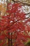 Follaje de otoño de colores Imagen de archivo libre de regalías