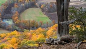 Follaje de otoño de Connecticut Foto de archivo libre de regalías