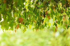Follaje de otoño de las hojas de otoño en fondo borroso bosque Foto de archivo libre de regalías