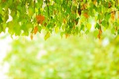 Follaje de otoño de las hojas de otoño en fondo borroso bosque Foto de archivo
