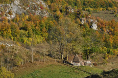 Follaje de otoño del otoño Fotografía de archivo