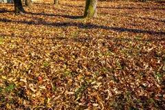 Follaje de otoño en césped Natural seque las hojas en otoño Imagen de archivo libre de regalías