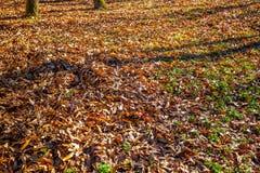 Follaje de otoño en césped Natural seque las hojas en otoño Imagenes de archivo
