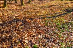 Follaje de otoño en césped Natural seque las hojas en otoño Fotos de archivo