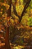 follaje de otoño en Carr Peak Imagen de archivo libre de regalías
