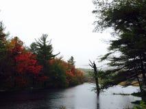 Follaje de otoño en día triste Fotos de archivo