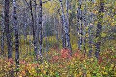 Follaje de otoño en el bosque Imagen de archivo