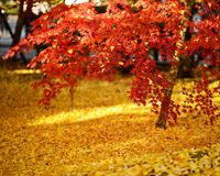 Follaje de otoño en Kyoto fotografía de archivo