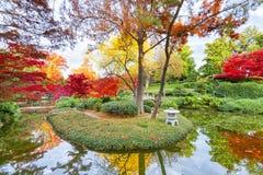 Follaje de otoño en Tejas fotos de archivo libres de regalías