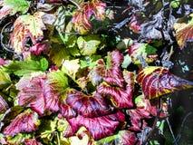 Follaje de otoño en un parque durante otoño Imágenes de archivo libres de regalías