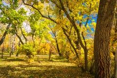 Follaje de otoño en Utah Fotos de archivo