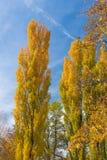 Follaje de otoño en Utah Fotografía de archivo libre de regalías