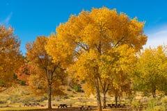 Follaje de otoño en Utah Fotos de archivo libres de regalías
