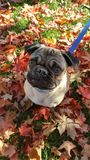 Follaje de otoño hermoso Imágenes de archivo libres de regalías