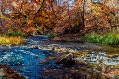 Follaje de otoño hermoso en Guadalupe River, Tejas Fotografía de archivo