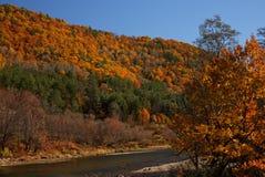 Follaje de otoño II del río Blanco Fotografía de archivo